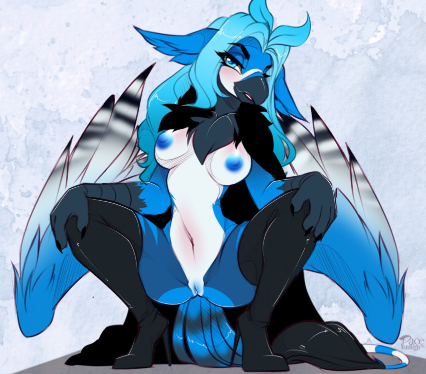 alivia avian beak bird black_fur blue_eyes blue_fur blue_hair blue_jay blue_nipples blue_pussy blush boots chest_tuft claws clothing corvid crouching feathered_wings feathers female footwear fur gryphon hair high_heels legwear navel nipples pacevanrign pussy shoes simple_background solo stripes tail_tuft thigh_highs three_tone_fur tuft white_fur wings