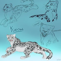 animal_genitalia animal_penis anthro ass balls erection feline feral fur grey_fur jazzlioness kieran kieran_(kierish) leopard looking_at_viewer male mammal multiple_images penis simple_background sketch sketch_page snow_leopard solo spots white_fur