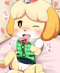animal_crossing barefoot bell blonde_hair blush blush_stickers breath brown_eyes canine canine clothing eyebrows_visible_through_hair female hair heart isabelle_(animal_crossing) japanese_text jingle_bell leaning leaning_back mammal nintendo no_underwear one_eye_closed open_mouth pussy ratipiko ribbons shaking shih_tzu shirt short_hair sitting skirt solo spread_legs spreading sweat tears text translation_request trembling uncensored upskirt vest video_games