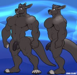 2018 5_fingers abs anthro balls biceps black_balls black_nose black_penis flaccid grey_eyes kihu male male_only mammal marsupial model_sheet muscular muscular_male navel nude pecs penis solo uncut wallaby