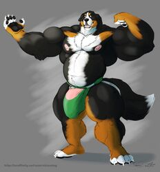anthro banana_hammock biceps big_biceps bulge canine chest_tuft claws clothing dog flaccid flexing full_body humanoid_penis jockstrap looking_at_viewer male male_only mammal muscles muscular muscular_male muscular_thighs paw paws pecs penis penis_base siriusdog solo standing toe_claws underwear vein