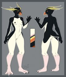 anthro avian beak bird black_feathers black_nipples black_pussy breasts crested_penguin feathers female hiddenwolf model_sheet nipples non-mammal_breasts nude penguin pussy rockhopper_penguin solo webbed_feet webbed_hands white_feathers