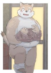 2019 anthro balls belly blush canid canine canis chocobibear clothing cute_fangs domestic_dog hi_res humanoid_hands male male_only mammal moobs navel overweight overweight_male penis shirt solo topwear underwear undressing