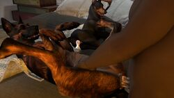 16:9 3d animal_genitalia animal_pussy anus bed_sheet bedding bethesda_softworks brown_eyes canine canine_pussy closed_eyes cum cum_in_pussy cum_inside cum_leaking digital_media_(artwork) dobermann dogmeat faceless_male fallout fangs female female_focus feral fur furry german_shepherd group half-closed_eyes herding_dog hi_res human human_on_feral human_penetrating interspecies lying male male/female male_on_feral mammal missionary_position on_back open_mouth pastoral_dog penetration penis pinscher pussy pussy_juice sex slapstick70 source_filmmaker teeth tongue tongue_out vaginal_penetration video_games zoophilia