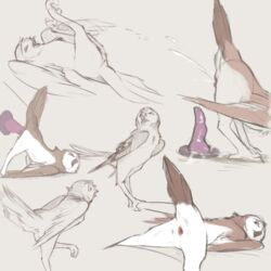 1:1 2019 ambiguous_fluids ambiguous_gender animal_genitalia ass avian beak bird cloaca closed_eyes digital_media_(artwork) dildo feathered_wings feathers feral hi_res looking_back looking_pleasured lying masturbation multiple_poses on_back open_mouth owl penetration perching pose presenting presenting_hindquarters sex_toy simple_background sketch solo talons tuke wings
